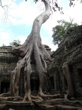 Ta Prohm, Cambodia.jpg